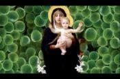 Giáng Sinh Mùa Hồng Ân (Slideshow)