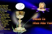 Những Bài Hát Thánh Ca Mình Máu Thánh Chúa Hay Nhất
