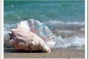 Ru em tiếng sóng biển