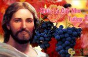 Chúa là cây nho
