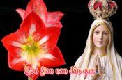 Ave Maria, con dâng lời chào Mẹ